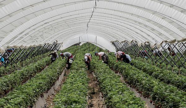 Ausbeutung und Menschenhandel in der Erntearbeit